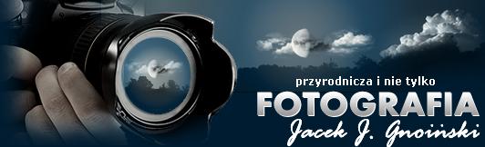 Fotografia przyrodnicza i nie tylko Jacek J.Gnoiński